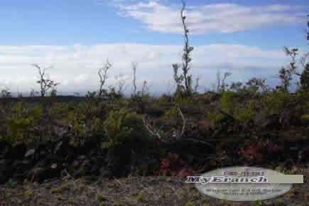 139: HAWAII-BIG ISLAND: Beautiful Ocean Views - $349/mo