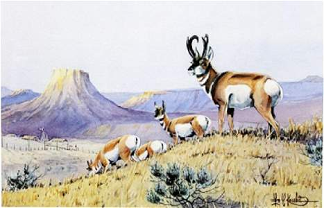 """Print """"Prong Horns Working the Ridge"""" after Les C."""