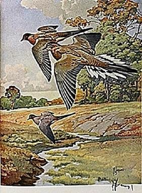 "LITHOGRAPH ""THE MOURNING DOVE""     ARTIST FRANCIS LEE"