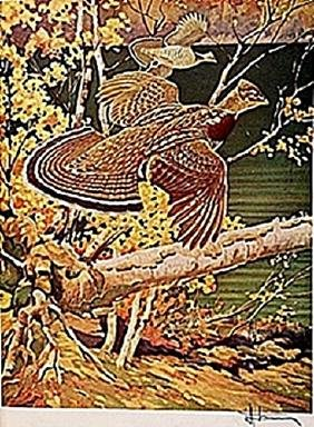 """LITHOGRAPH """"THE RUFFED GROUSE""""     ARTIST FRANCIS LEE"""