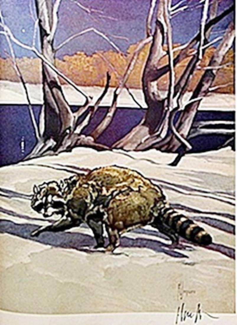"""LITHOGRAPH """"THE RACCOON""""     ARTIST FRANCIS LEE JAQUES"""