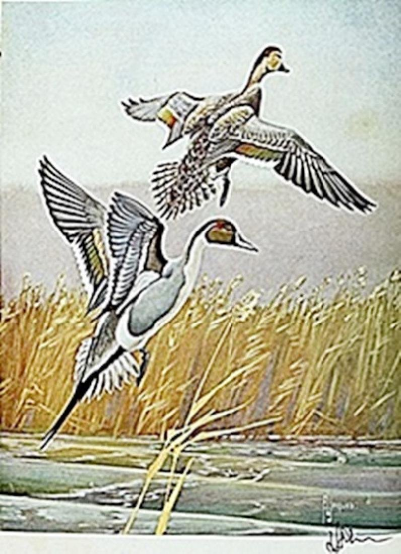 """LITHOGRAPH """"THE PINTAIL DUCK""""     ARTIST FRANCIS LEE"""
