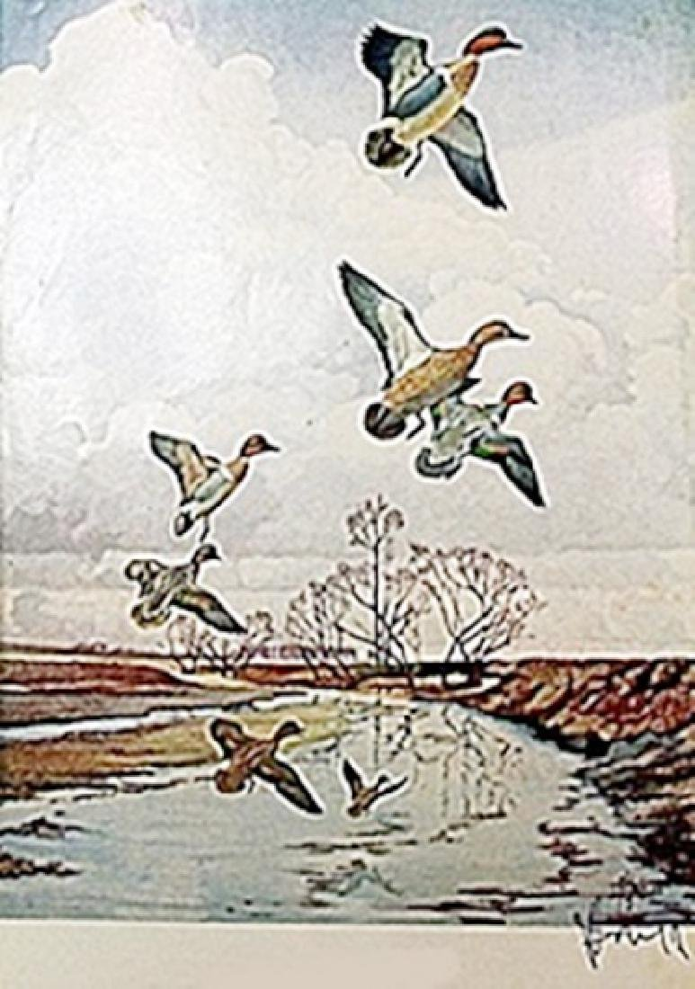 """LITHOGRAPH """"THE GREENWING TEAL""""     ARTIST FRANCIS LEE"""
