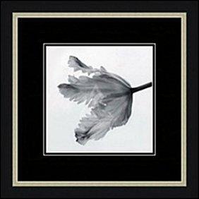 Parrot Tulip Ii By Artin