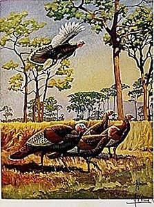 "Lithograph ""the Wild Turkey"" By Artist Francis Lee"