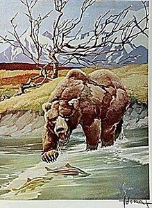 "Lithograph ""the Alaska Brown Bear"" By Artist Francis"