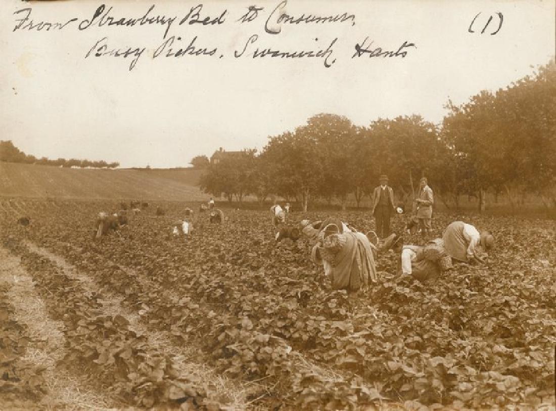 Set of 4 Strawberry Pickers, England. C1925