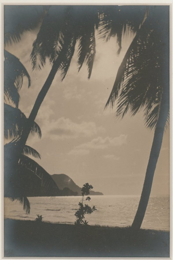 Hawaii Beach with Palm Trees. C1920