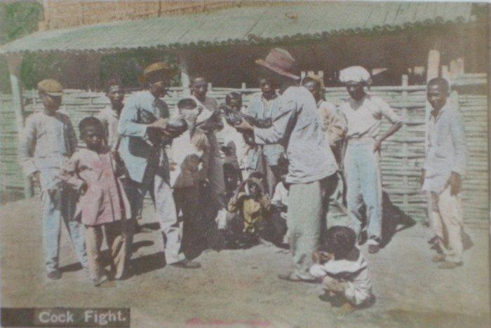 Philippines Cock Fight. c1890