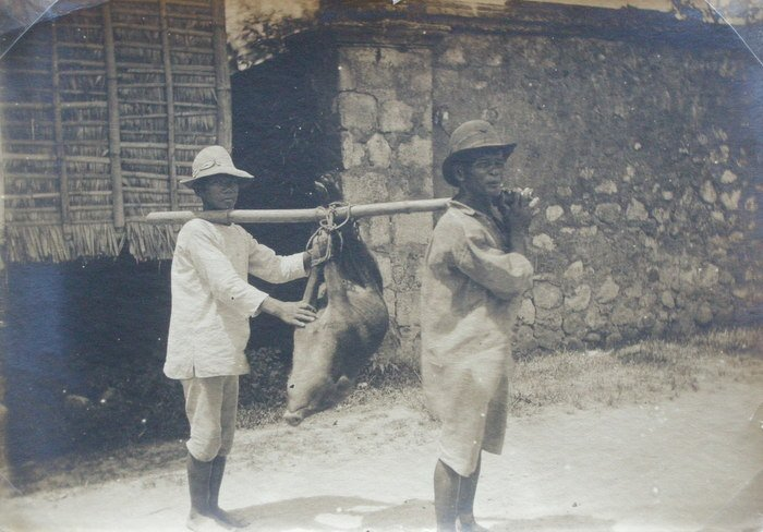 Philippines - Carrying a Pig. c1900