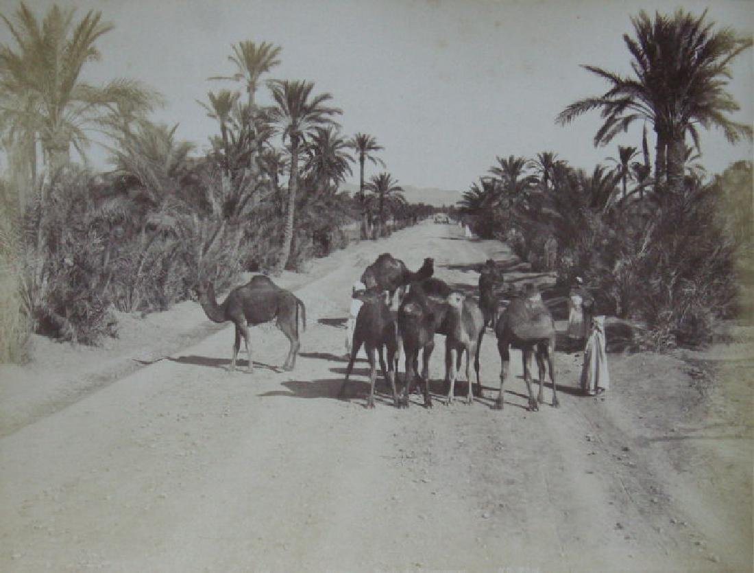 Camels on the Road to Touggourt, Algeria. c1880