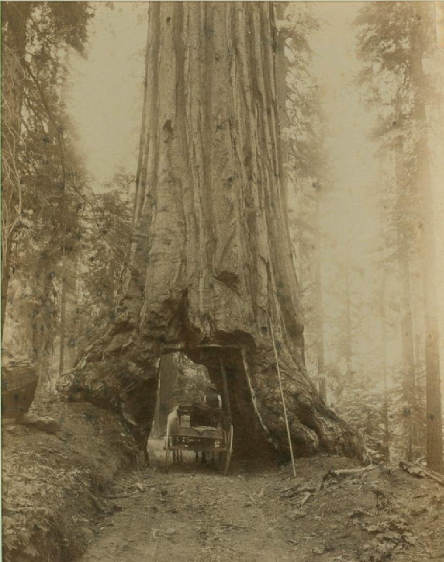 Wawona, Mariposa Grove, California. c1870