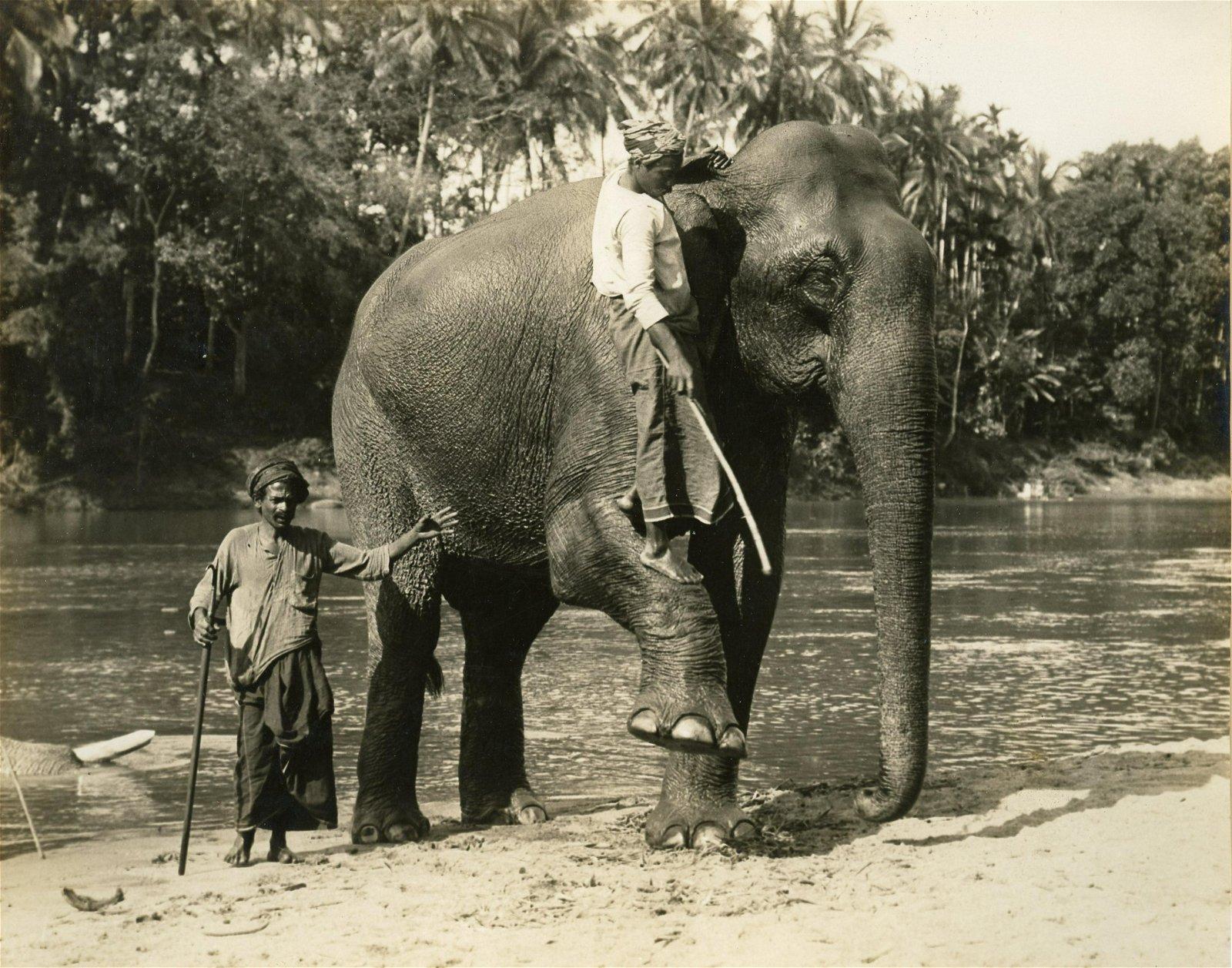 Ceylon Elephant at Kandy Lake. c1925