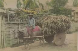 Bullock Cart, Philippines. C1890