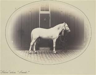 Selim alias Snail Racehorse c1865