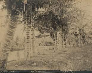 Old Plantation, Hawaii. c1880