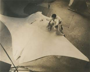 Devil Fish, Manta being prepared for American Museum of