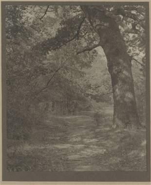 Forest Scene. c1910