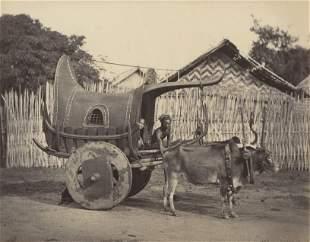 BURMA. Burmese Bullock Cart. C1880