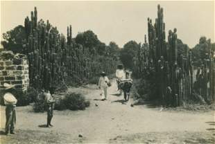 Mexico, where Nature is a fence builder. c1925