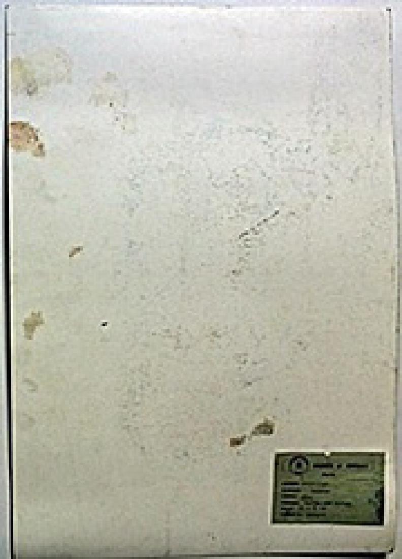 Pastel on Paper -  Amadeo Modigliani - 3