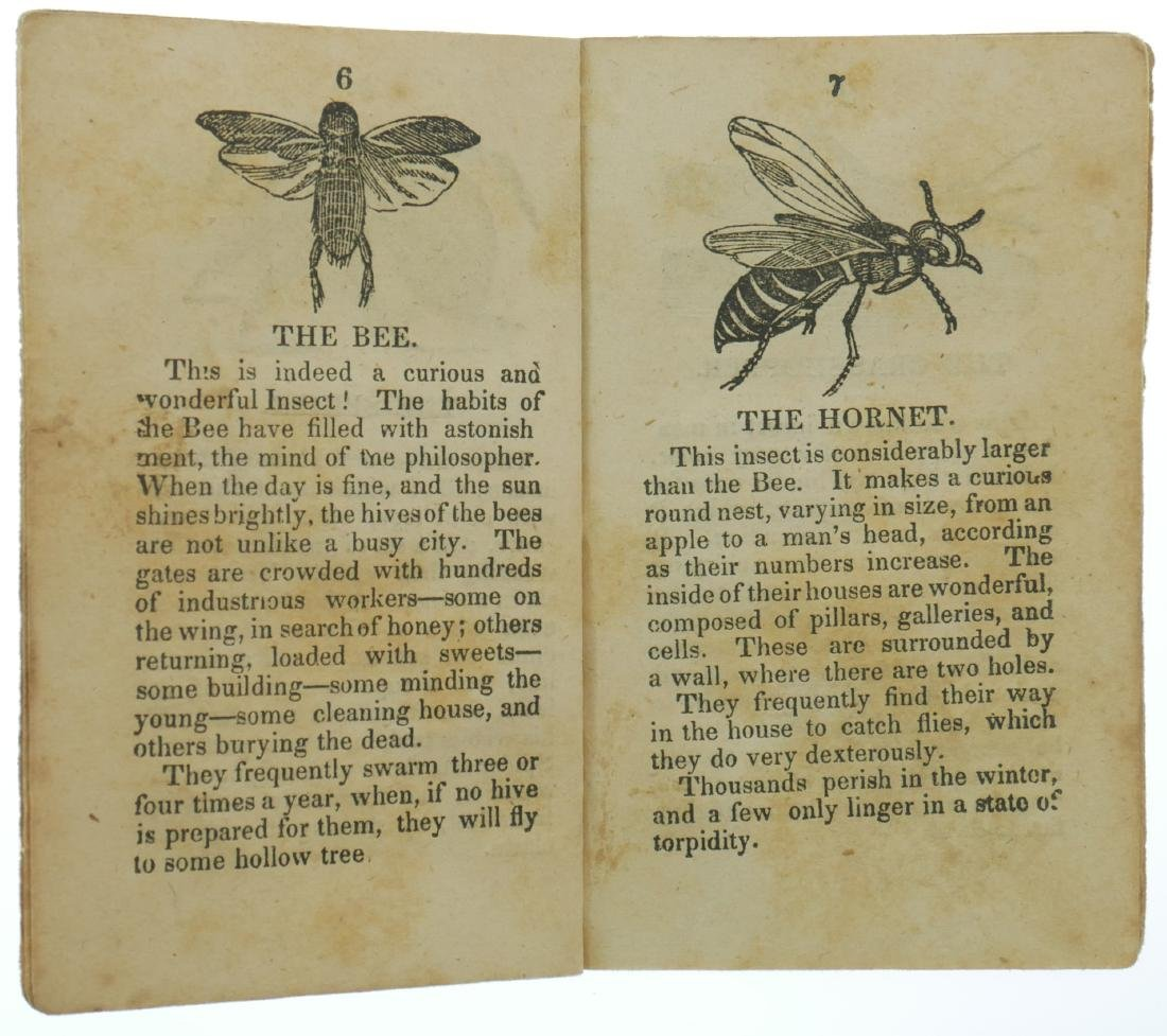 1820s Chapbook History of Insects & Reptiles - 4