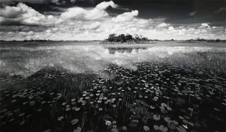 CLYDE BUTCHER, Massive Loxahatchee Photograph