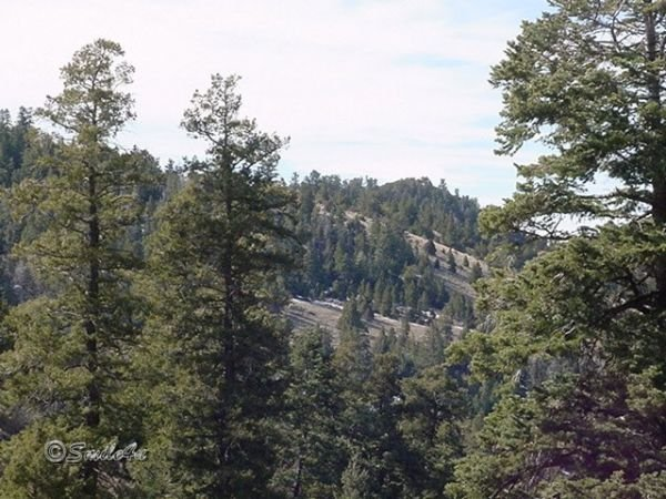 2: 10 Acres Sangre de Cristo Ranch Alamosa Colorado