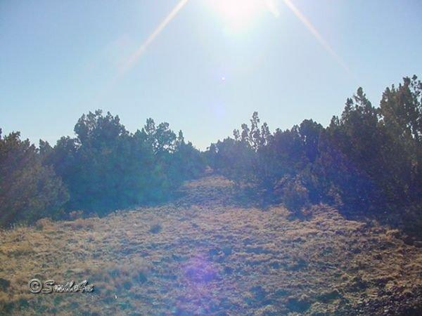 4: 1 Acre Apache Arizona Park Show Low Concho Snowflake