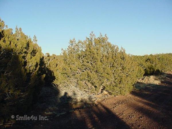 1 Acre Apache Arizona Show Low Pine Concho Snowflake