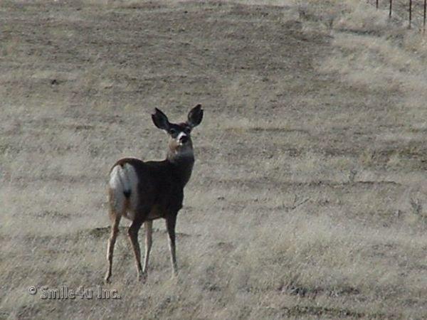14: 5 Acres Lake County Klamath Christmas Valley Orego