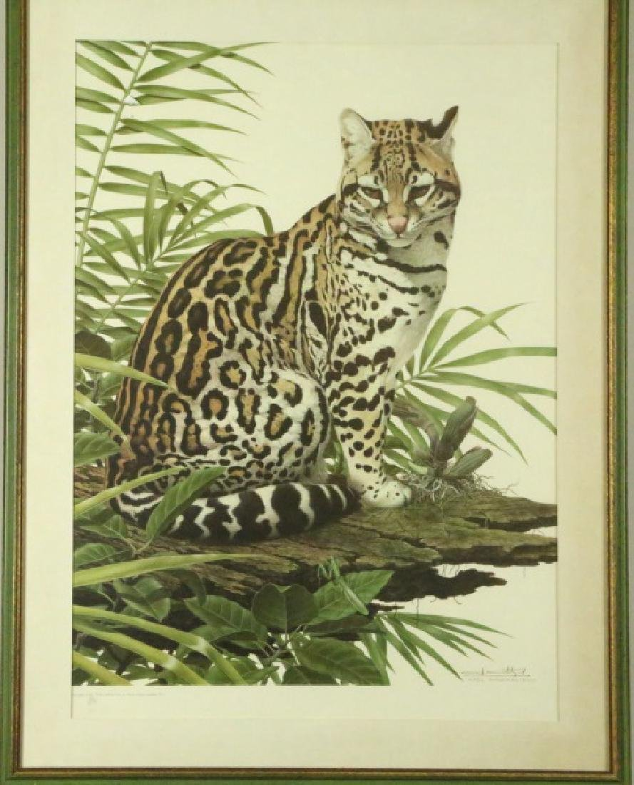 "AXEL AMUCHASTEGUI ""LEOPARD IN TREE"" #43/250"