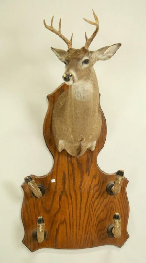 DEER TAXIDERMY TROPHY MOUNT