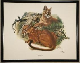 "RICHARD TIMM ""MOUNTAIN LION"" PEN SIGNED PRINT, 1974"