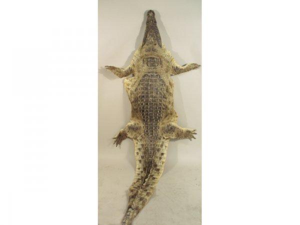 1201: Crocodile skin.