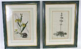 ANTIQUE BOTANICAL HAND COLORED ENGRAVINGS