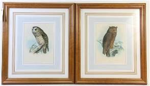 PAIR OF ANTIQUE J. WOLF OWL ENGRAVINGS
