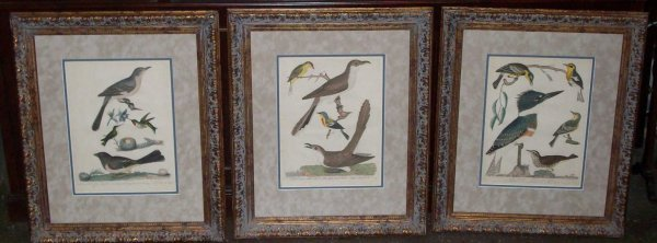 19: THREE FRAMED AND MATTED A. WILSON ENGRAVINGS
