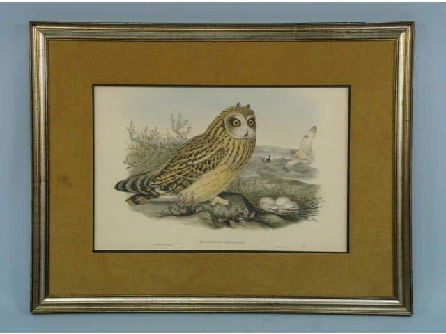 J. GOULD  PRINT OF AN OWL, CIRCA 1900