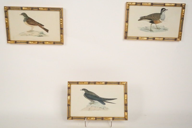SET OF SIX P. OUDART HAND COLORED PRINTS OF BIRDS