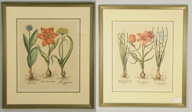 PAIR OF BOTANICALS PRINTS