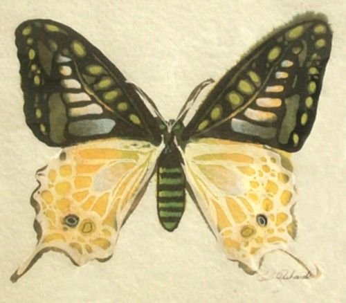 1205: BUTTERFLY - MIXED MEDIA - PAUL RICHARDS