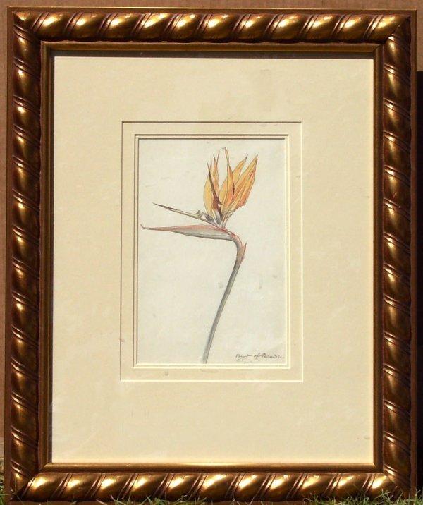 243: Carl Link - Bird of Paradise - Pencil