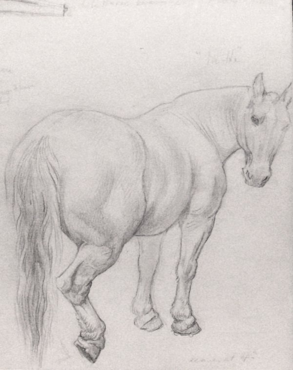 21: Carl Link - Horse Pencil Drawing