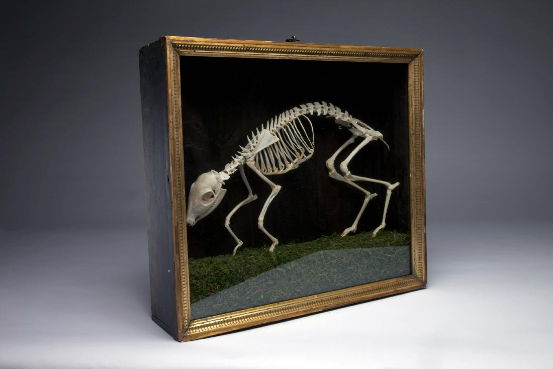 An Articulated Skeleton of a Mouse Deer - 3
