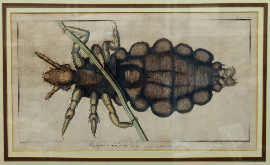 Large 18th Century Robert Hooke Insect Engraving