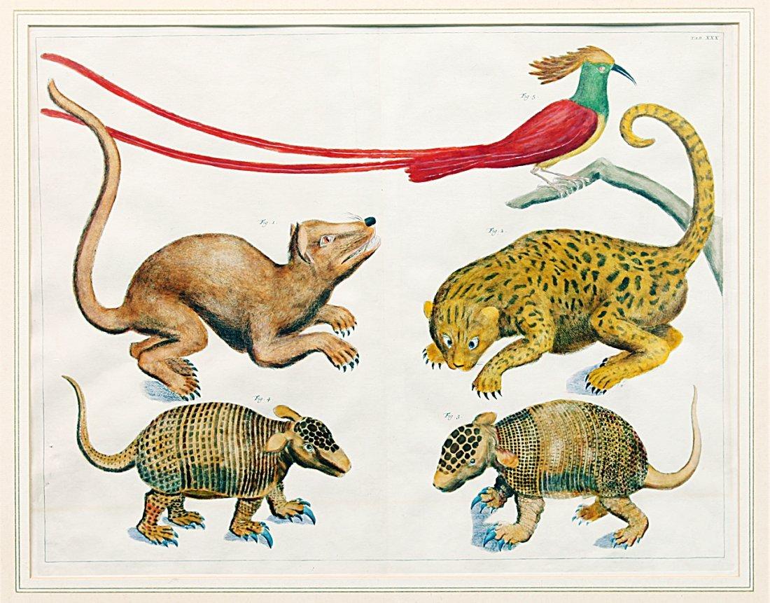 18th Century Colored Engraving of Animals & Bird