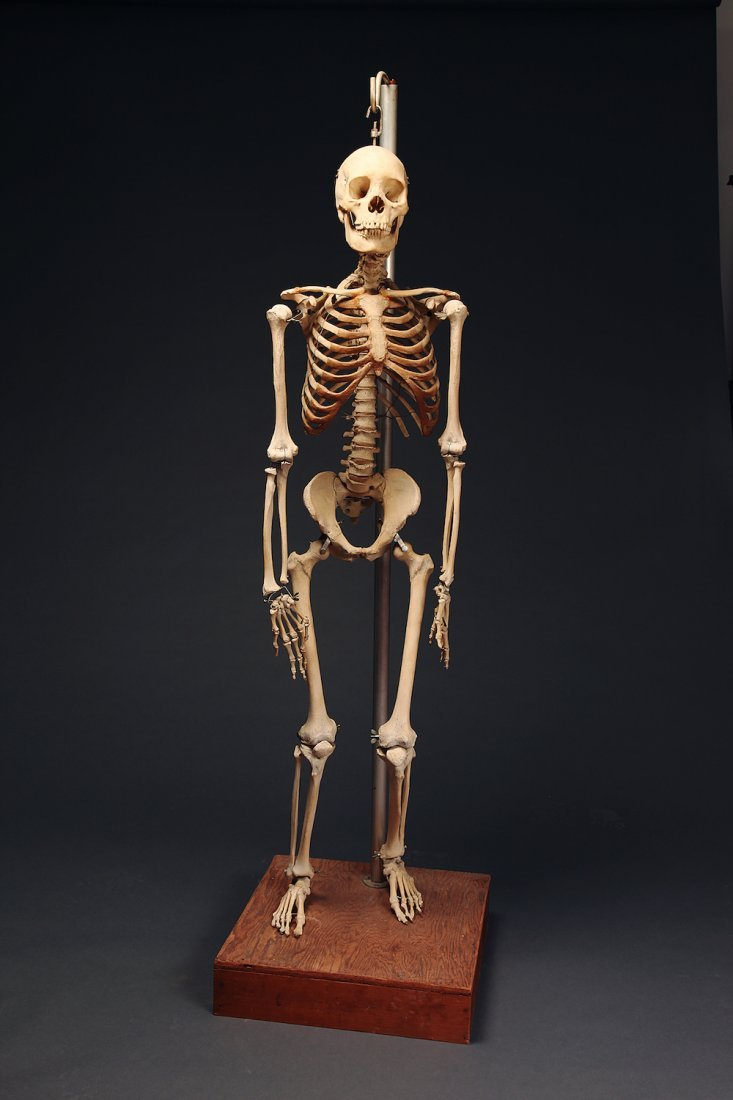 Fine Antique Real Human Skeleton