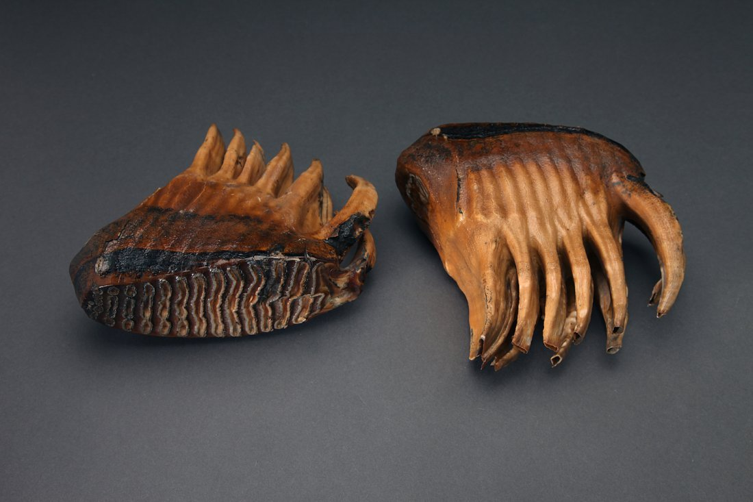 Very Fine Pair Of Wooly Mammoth Molars