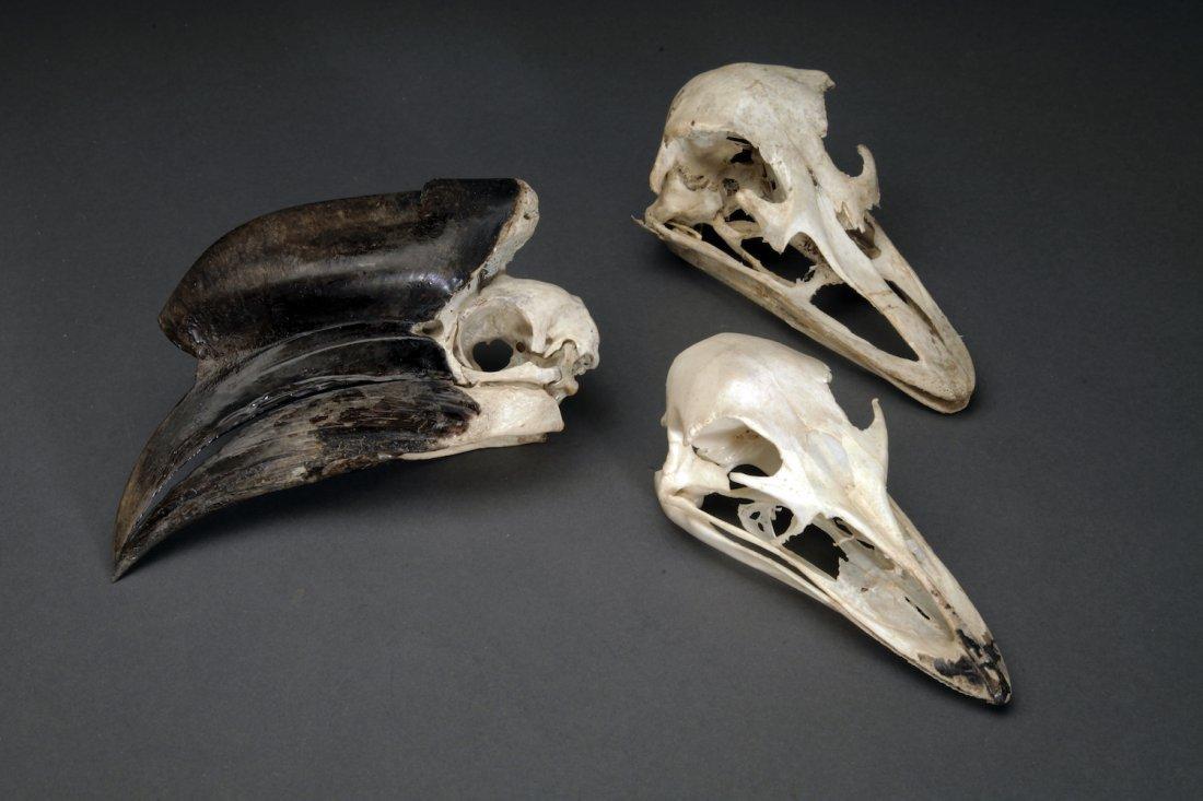 3 Bird Skulls